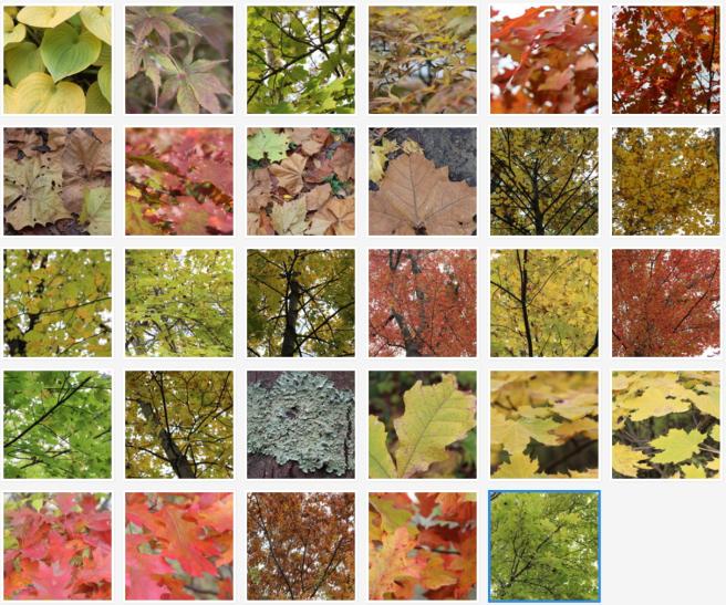Fall-2017-Nature-Set