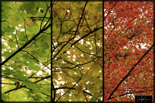 GYR-Fall-Composite